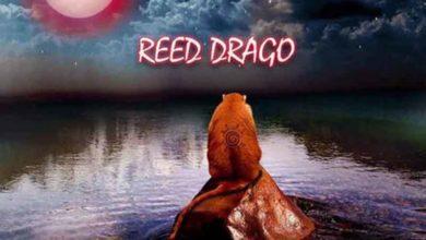 Photo of Reed Drago – The Movie Ft. Medikal & KayNu